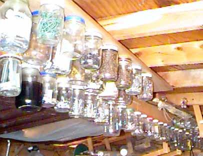 attach jar lids to roof beam