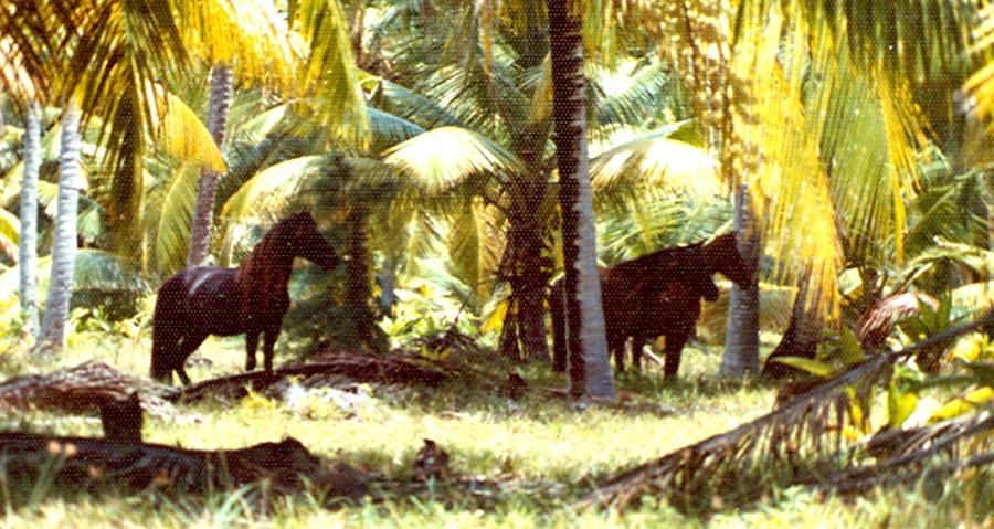 1976 War Stories from Diego Garcia, BIOT